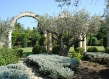 Rent Villa Bella Luxe Saint Tropez - garden and its olive trees